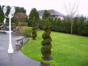 Landscape Hedge Trimming amd Design.Curvy Heges. Lubberts Landscaping