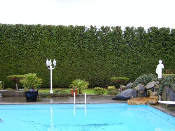 trimmed hedges, shrubs and lawn by a pool