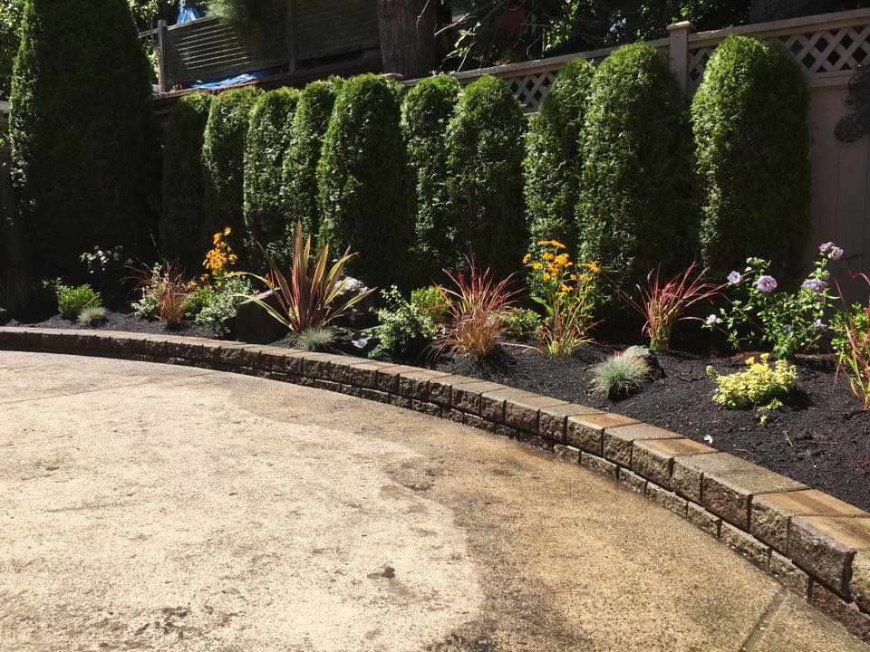 Neatly maintained garden bed plants and trimmed hedges